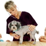 Is pet insurance essential for purebred dog owners?