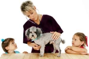 Vet, Dog And Children