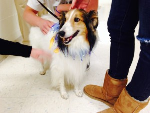 Therapy Dogs at Work at Franklin Regional High School